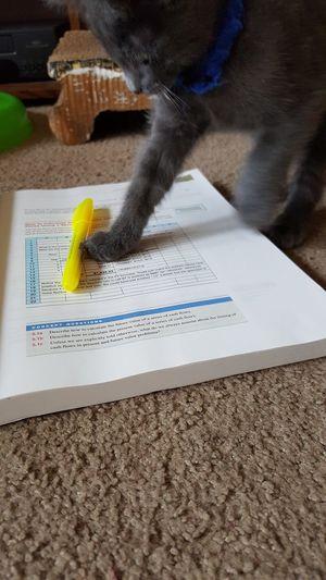Book Cat Communication Education Hobbies Indoors  Kitten No People Paper Text Western Script