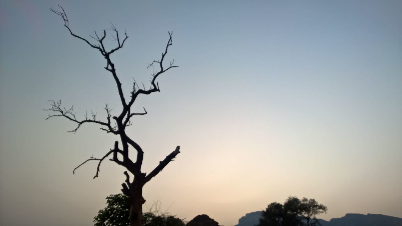 Bare Tree Beauty In Nature Branch Clear Sky Day Low Angle View Moon Nature No People Outdoors Scenics Silhouette Sky Sun Sunset Tranquil Scene Tree Treetop
