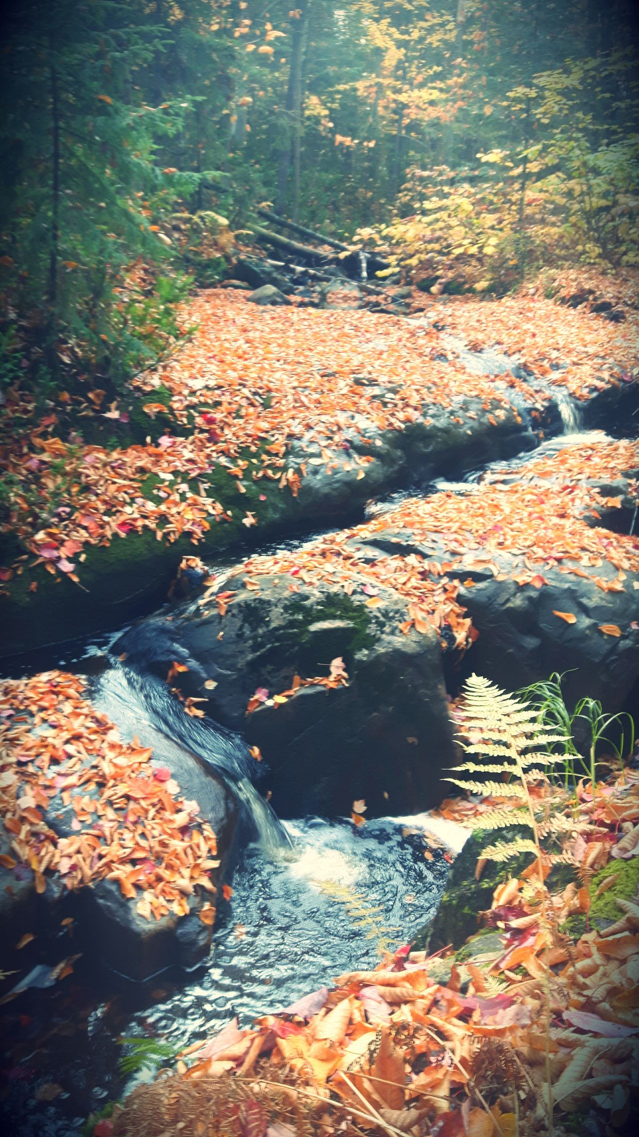 Water Nature Beauty In Nature Outdoors No People Day Scenics Stream Waterfall Water Stream Fall Fall Collection Fall Leaves Fall Season Fall Beauty Fallen Leaves Fall Colors Fall Collection Fallen Leaf