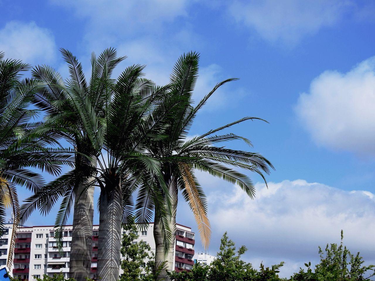 Palm Tree Tree Sky Low Angle View Growth Cloud - Sky No People Day Outdoors Nature IGA 2017 Berlin Germany