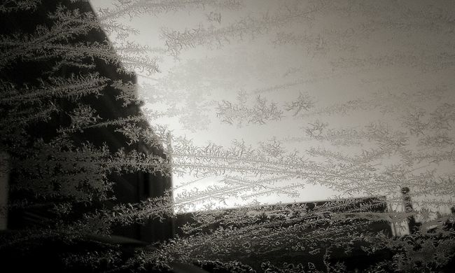 Cold Winter Ice Iceflower Frost Coldweather Window Cold Days Blackandwhite Blackandwhite Photography WomaninBusiness