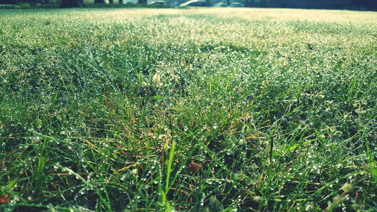Grass Field Nature Growth Green Color Backgrounds Beauty In Nature Freshness Tau Regentropfen Grass Grass Photography Grassy Tautropfen EyeEm Best Shots EyeEmBestPics 2017 Eyeemphotography EyeEm Masterclass First Eyeem Photo EyeEm EyeEm Gallery Outdoors Outdoor Photography Frühling