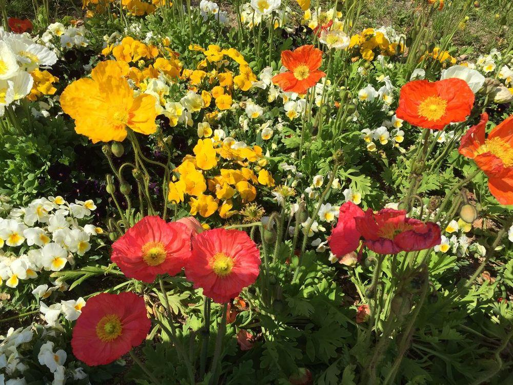 Awaji FirstTime Enjoying Life Sunny Day Sunny Flowers Beautiful Relaxing B Class