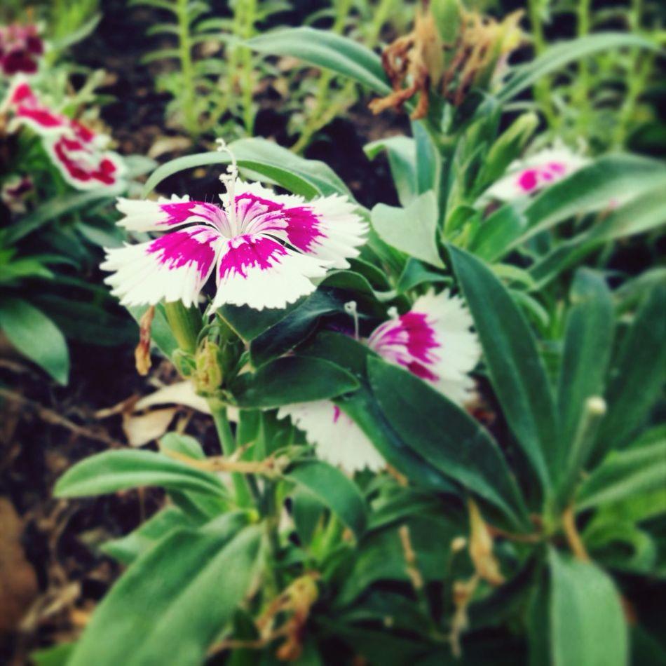 Flower.. Flowers