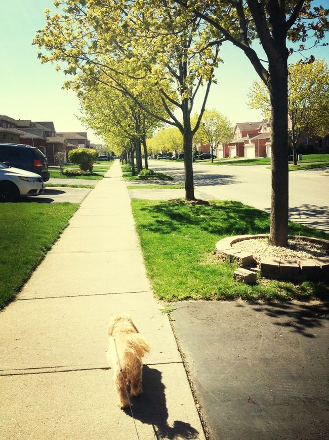 Walkin' this one...
