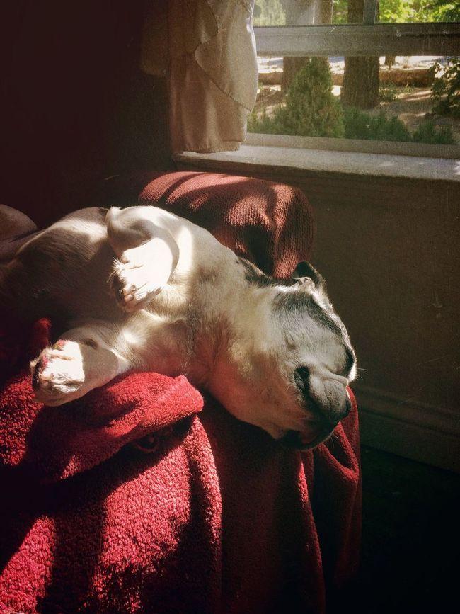 Lazy Dog Daze. Dog Pets Animal Themes