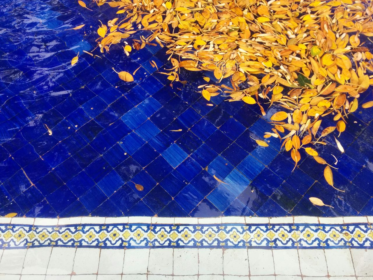 Leaves in the Colorful Tiles Fountain. The Purist (no Edit, No Filter) Colorsplash EyeEm Best Shots Color Explosion Natural Composition