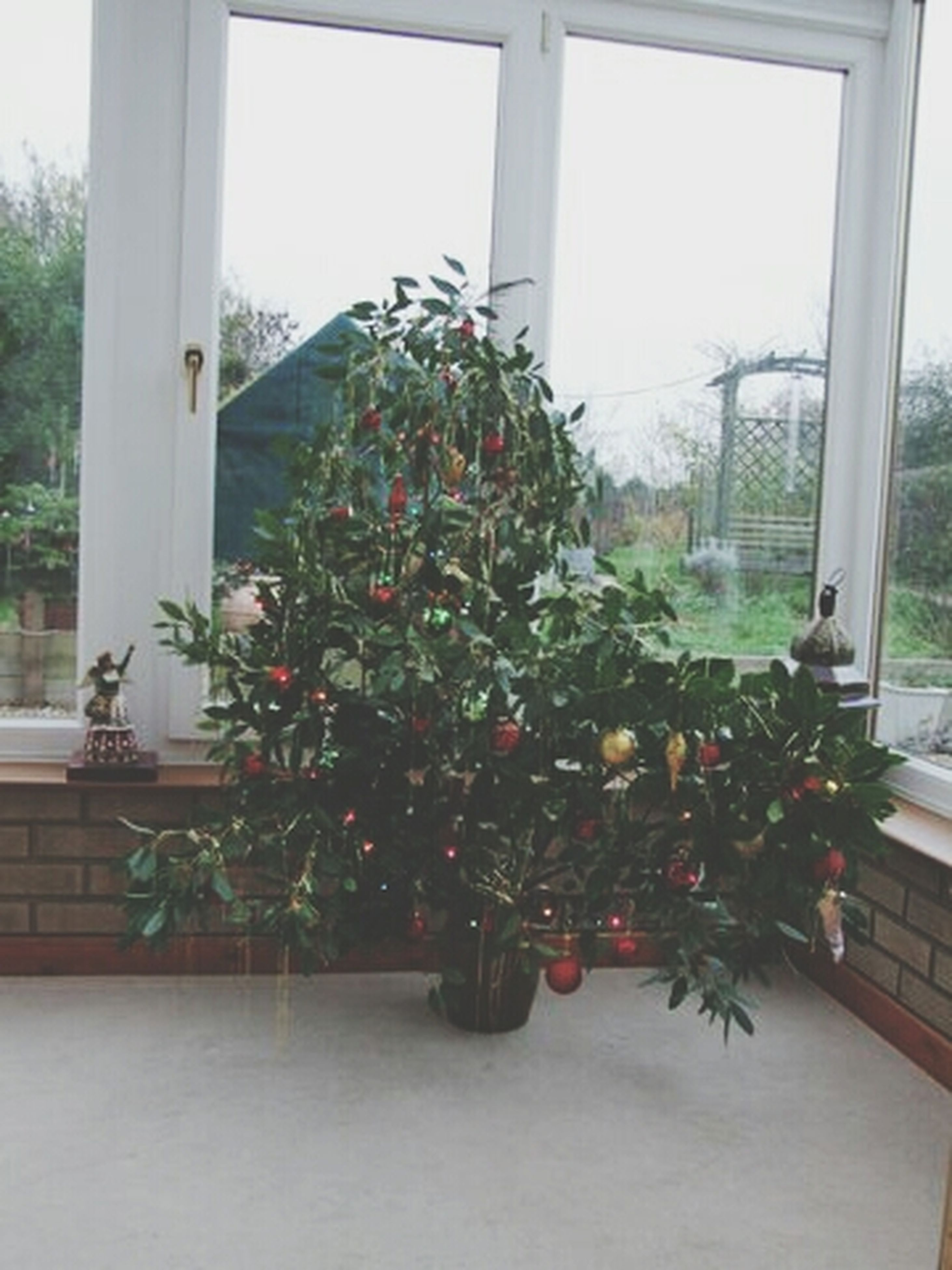 window, flower, potted plant, plant, growth, indoors, freshness, glass - material, house, flower pot, window sill, vase, home interior, nature, fragility, built structure, table, transparent, tree, day