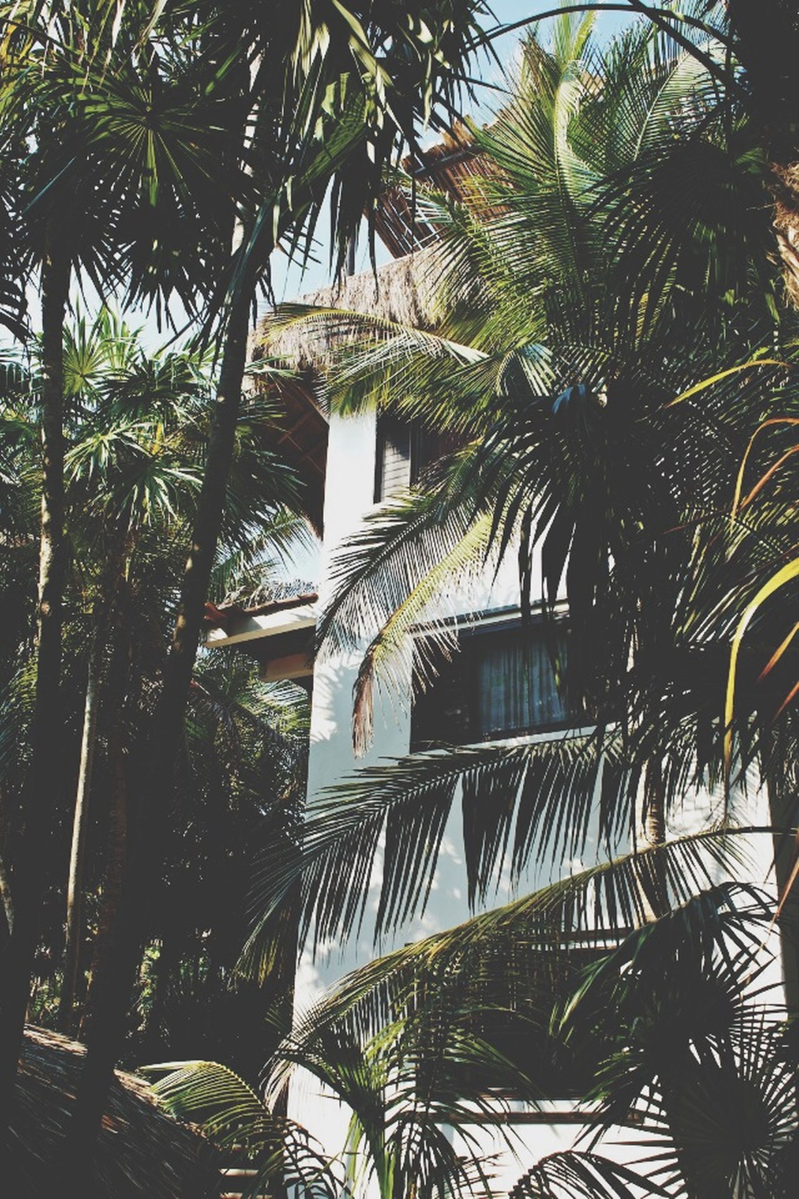 building exterior, architecture, tree, built structure, low angle view, palm tree, growth, building, branch, residential building, house, green color, day, sky, outdoors, residential structure, leaf, sunlight, no people, city