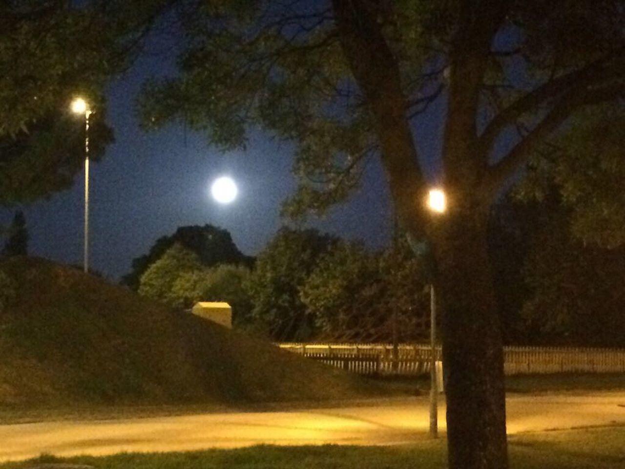 night, moon, illuminated, street light, tree, nature, beauty in nature, outdoors, tranquility, moonlight, tranquil scene, no people, astronomy, sky