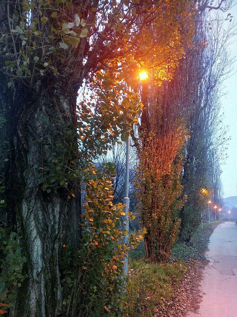 Foca Twiligh Lamppost Light Night Lights Trees Treerow Autumn Autumn Colors Autumn Leaves Road Put Jesen Boje Jeseni Sumrak Drvo Drvored