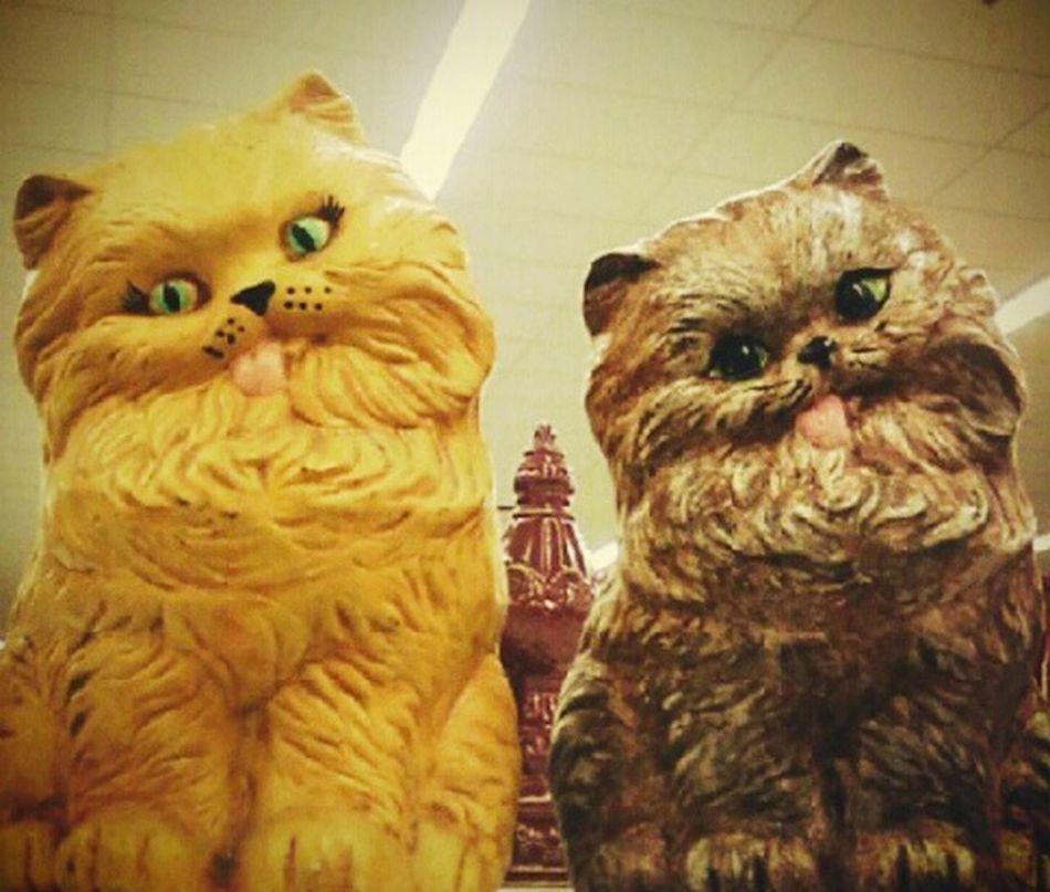 Thrift Store Finds Cats Figurines  Ceramics Funky Retro Pair Blonde Brunette Derpycat Derp Face Home Interior Antique Second Hand