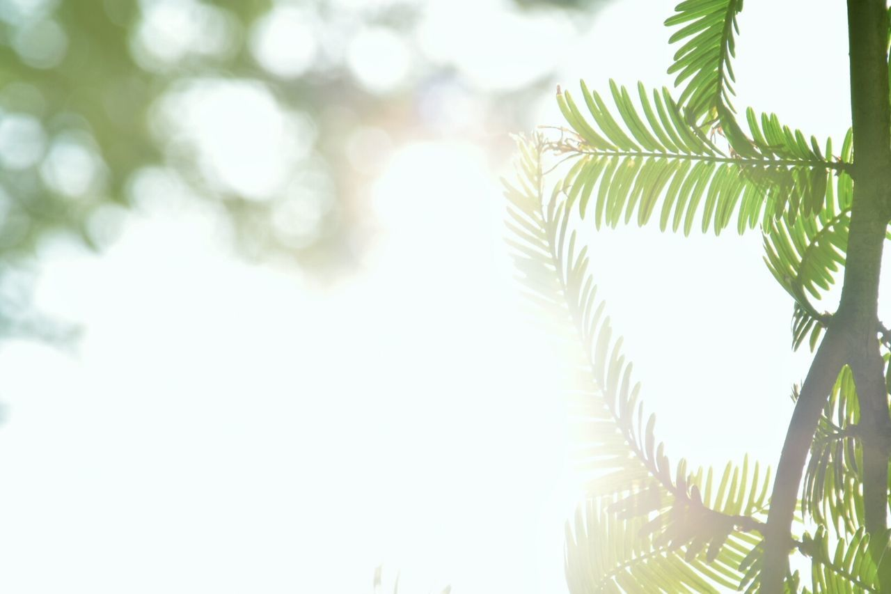 tree, leaf, growth, green color, nature, no people, day, close-up, beauty in nature, outdoors, palm tree, branch, sky, freshness