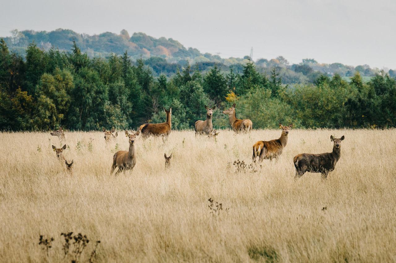 Beautiful stock photos of hirsch, Animal Themes, Animal Wildlife, Animals In The Wild, Barnsley