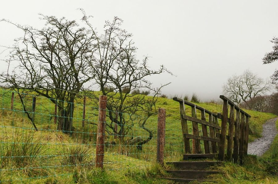 Fence Tree No People Nature Outdoors Boundary Tranquility Grass Sky Day Lush - Description Green Pendle Hill Witches Winter Landscapes Bridge Path Misty Days Tranquil Scene Scenics Beauty In Nature Foggy Nature Misty
