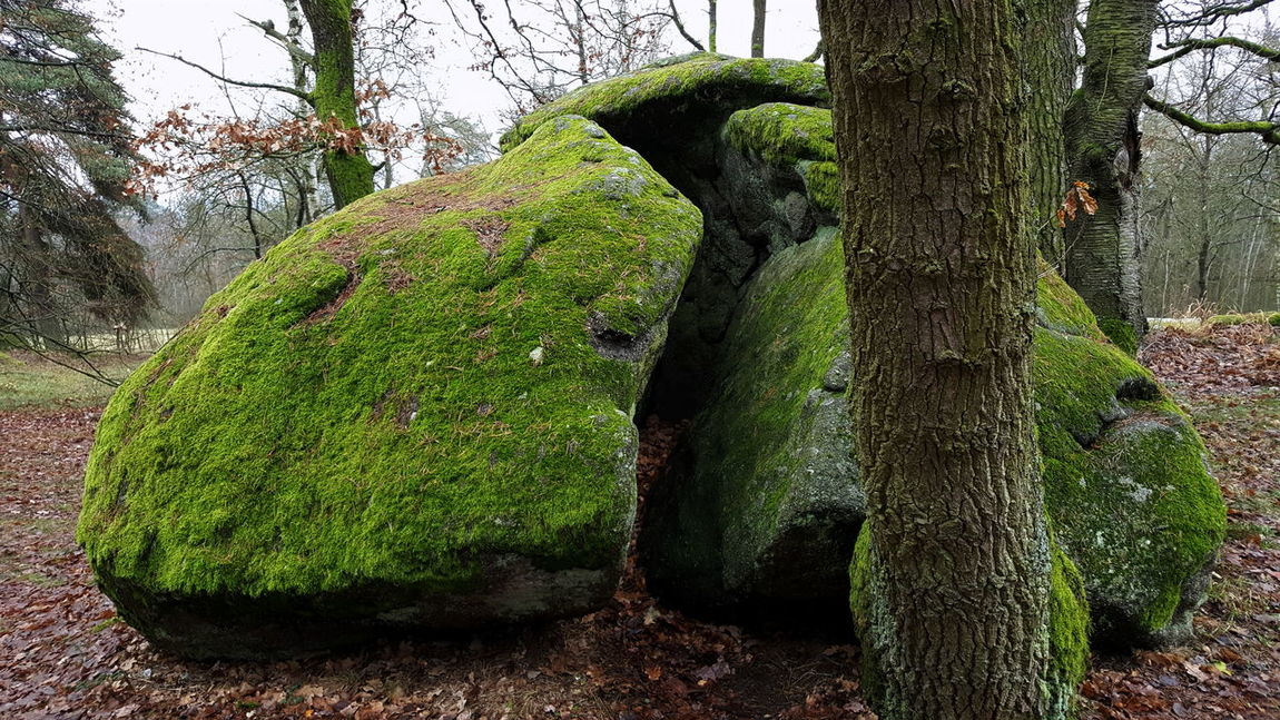 Autumn Broken Stone Czech Republic Day Green Color Nature No People Outdoors Stone Tree