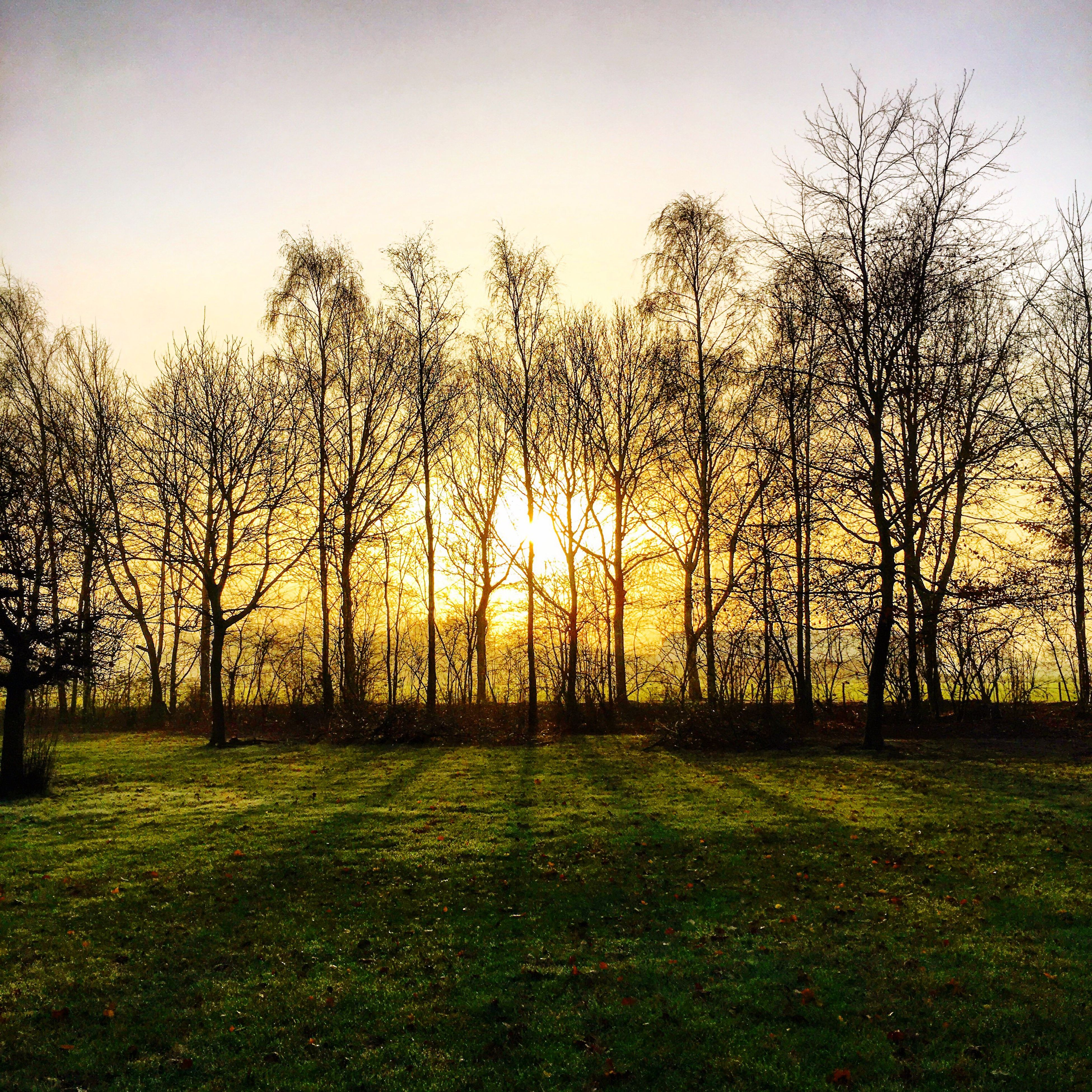 tree, grass, tranquility, bare tree, tranquil scene, field, sunset, landscape, scenics, beauty in nature, grassy, nature, clear sky, sky, branch, growth, silhouette, idyllic, sun, sunlight