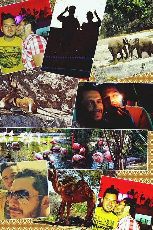 Lindisimo dia para pasar muy bien mi cumpleaños 23/03/2014 gracias amor por mi dia Africam Safari Animals Animales Amor ♡♡♡♡