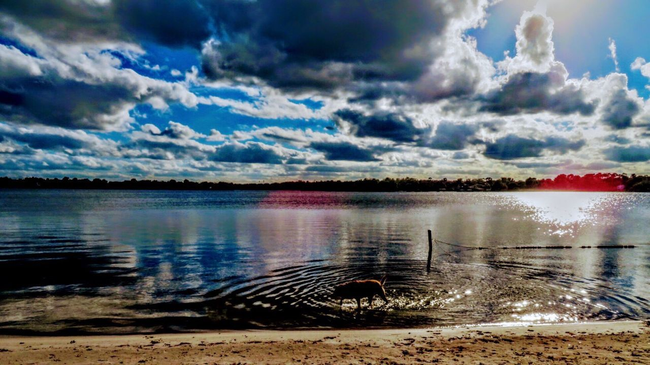 Waterfront Cloud - Sky Water Sky Nature Outdoors Tranquility Beauty In Nature Tranquil Scene Beach Scenics No People Sand Shore Dog Playing Reflection Labrador Lake Sunset Beauty In Nature Dog Swimming Rippled Sunset Reflection Dogs Of EyeEm Water Play
