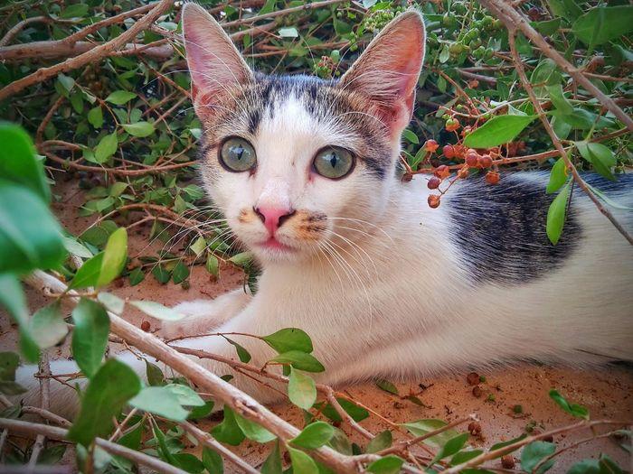 EyeEmNewHere Nature Cats 🐱