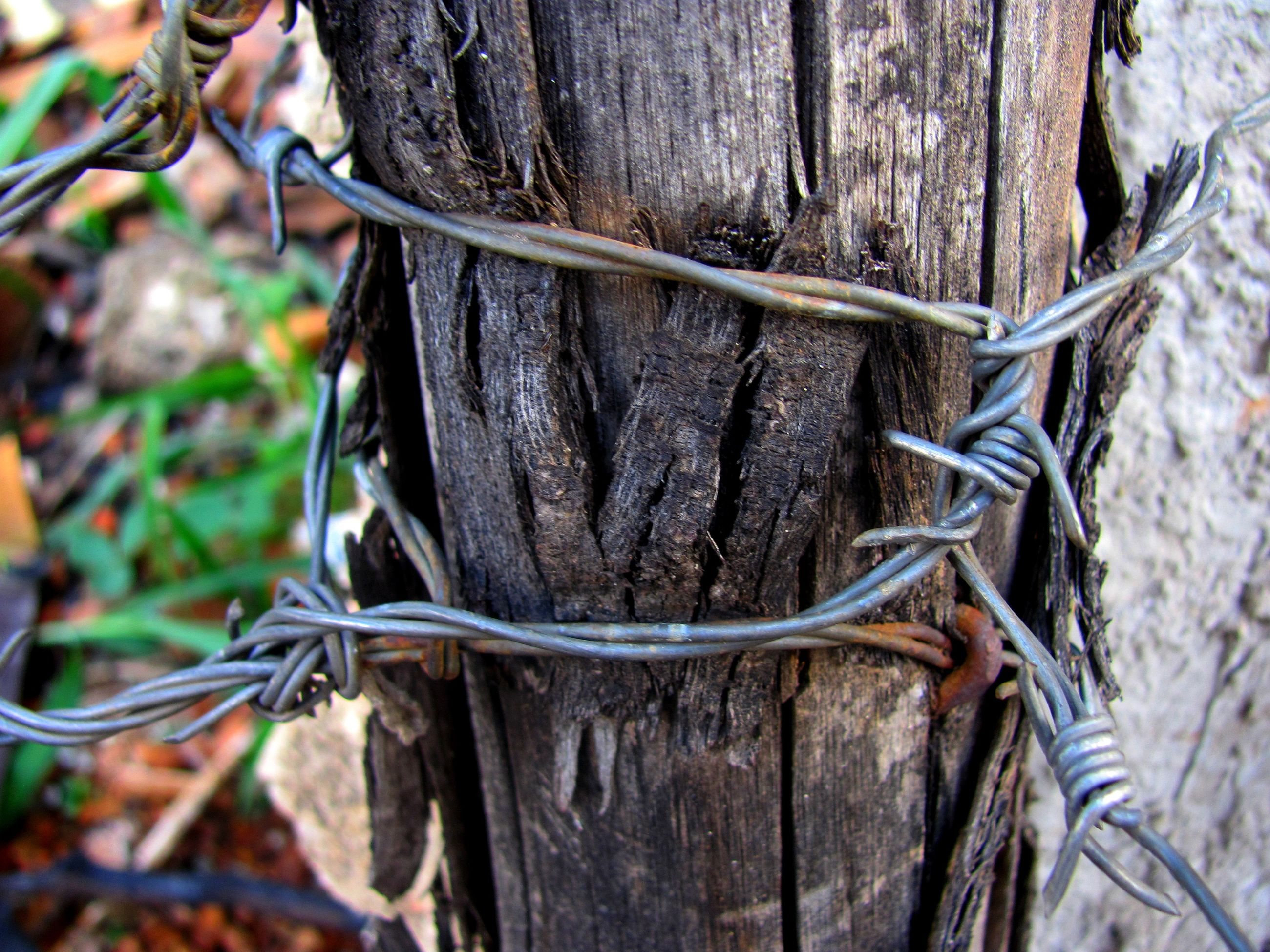day, outdoors, tree, no people, tree trunk, tied up, close-up, nature
