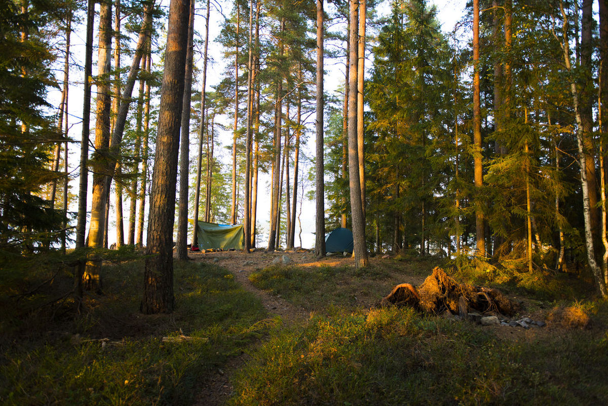 Camping at the Lake Stora Bör 09/16 Camping Canoeing Europe Forest Lake Lanscape Nature Outdoor Outdoors Skandinavia Sweden Tent Trees Wandering Wanderlust Wilderness
