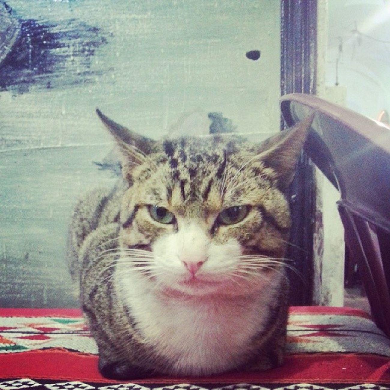 InstaTunis Cat Bestoftunisia Livetunisia