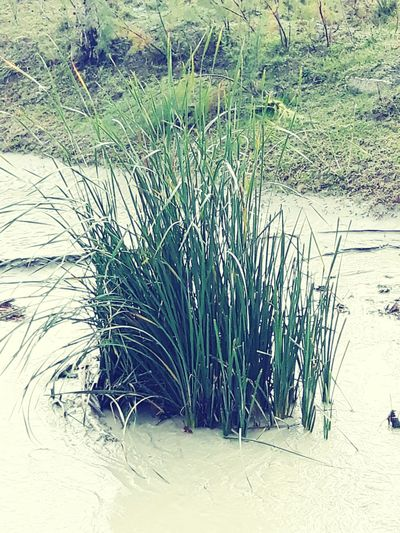 Nature Water Grass Day Growth No People Outdoors Beach Beauty In Nature Close-up
