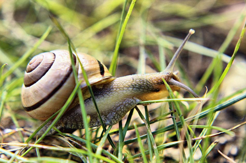 Snail Snails Snail🐌 Snail Collection Snailshell Snail Shell Snail Photography Snailhouse Snail Shells Snail Shell Close Up Snail Mail Snail Life Snail On The Road Snails Having Fun Snail Trail Snail Race Snails In Shells One Animal Close-up Animal Wildlife Animals In The Wild Nature Plant Macro Macro Photography