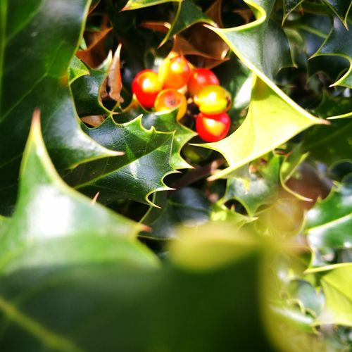 Leaf Growth Nature Green Color Plant No People Close-up Outdoors Day Food And Drink Beauty In Nature Fruit Food Freshness Healthy Eating Tree
