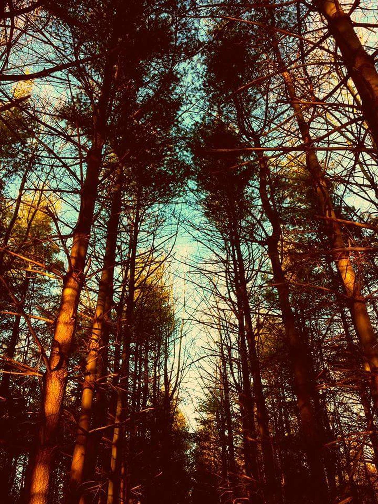 Woods Trees Dead Tree Smithsburg Maryland Maryland