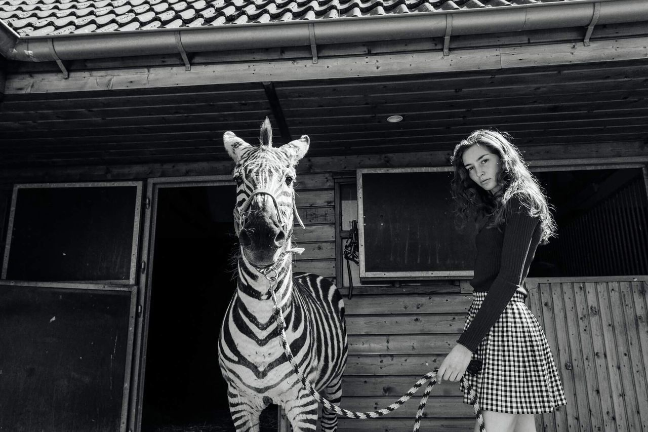 Eindexpo! Looking At Camera real people portrait young women outdoors animal themes day Standing Netherlands animal wildlife sky Zebra summer unexpected