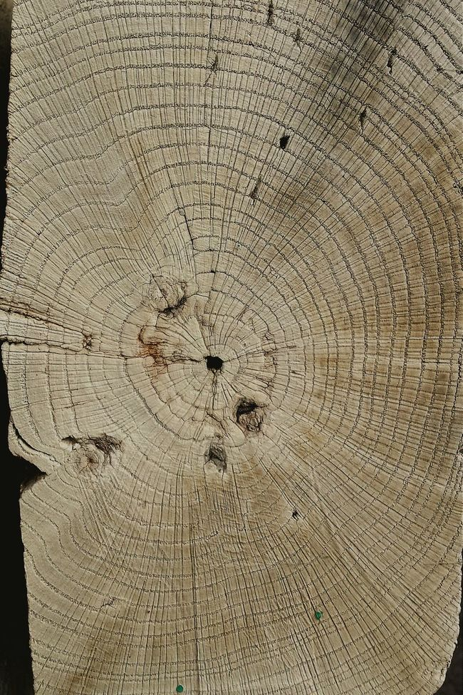 Tree growth rings Working On A Break Beautiful Nature Light And Shadow Artphotography Urban Filter 4 Observing Taking Photos Geometric Shapes Wooden