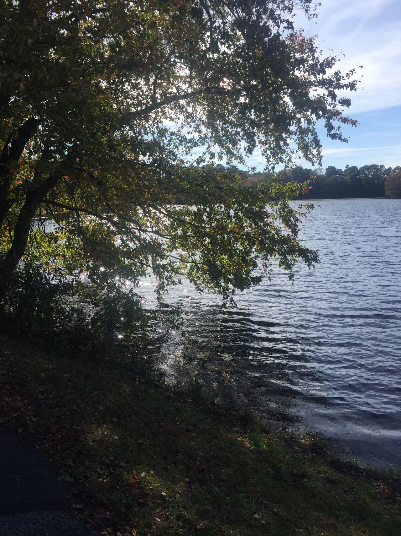 Millsboro Pond Beauty In Nature Trees TreesAndWater Autumn Ponds