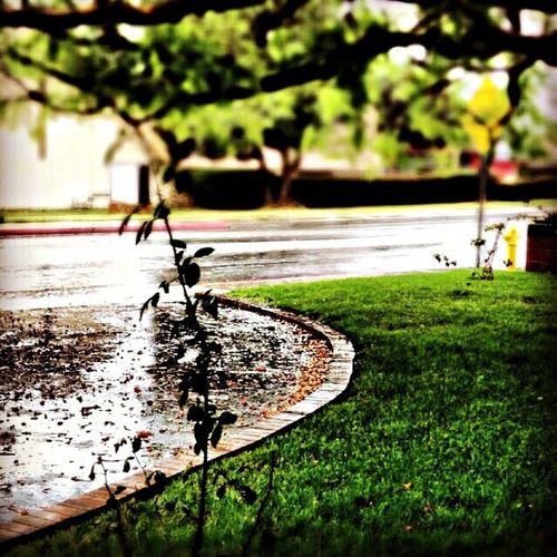 Flowers Rainy Days ☔️
