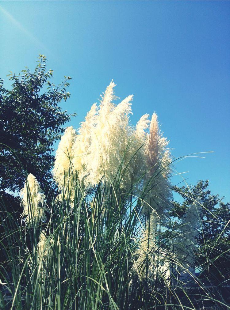 秋晴れ! Walking Around Sky Nature Relaxing