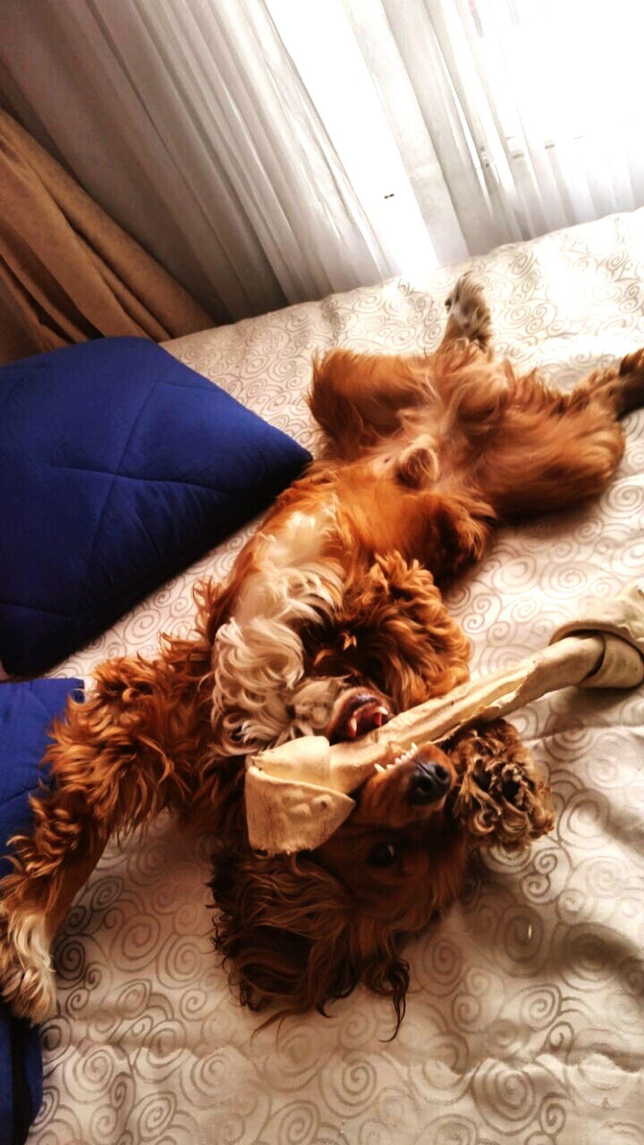 Dog Dog❤ Mascotas 🐶 Lo Mejor De Mi Vida Lo Es El<3 Tobby con su nuevo Juguete