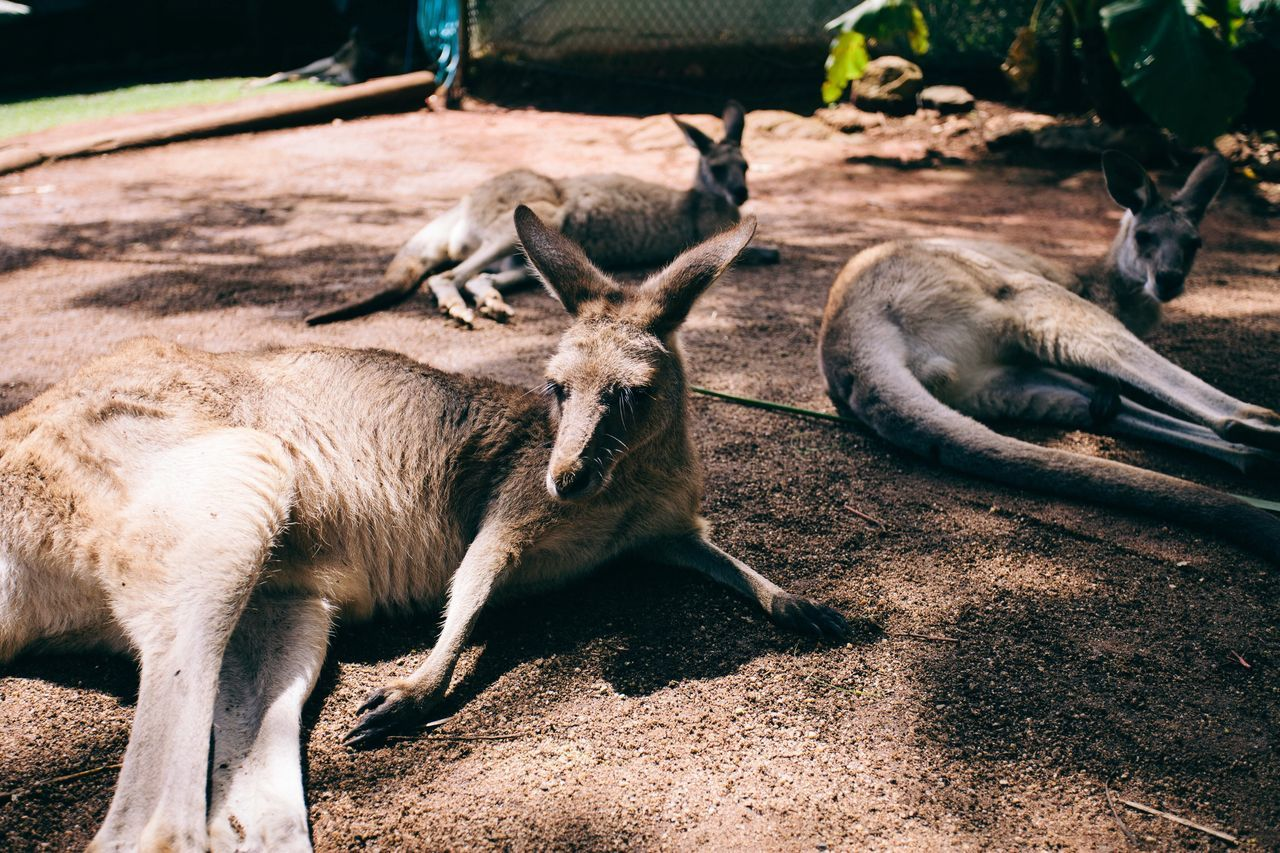 Nature Animals Kangaroo Vscocam EyeEm Best Shots