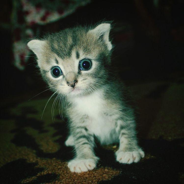 My pet Pet Pet Photography  Littelpet
