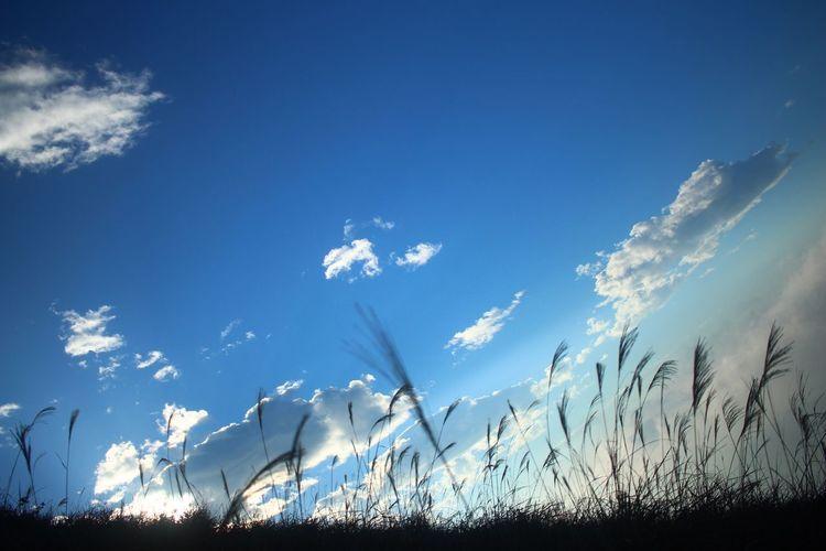Blue Sky Cloud - Sky No People Outdoors Beauty In Nature Mountain Portrait Eyeem Market EyeEm HongKong Photography Clear Sky