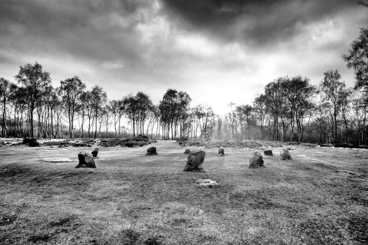 9 Ladies Stone circle against the sun Animal Themes Bare Tree Beauty In Nature Bird Cloud Cloud - Sky Cloudy Day Field Grass Landscape Nature Outdoors Park - Man Made Space Scenics Sky Tranquil Scene Tranquility Tree