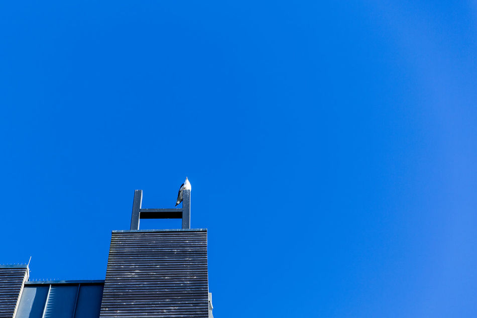 Animal Themes Animals In The Wild Architecture Bird Blue Building Exterior Built Structure Chimney Clear Sky Copy Space Day Guitar Low Angle View No People Outdoors Perching Roof Rooftop Sky Sky And Clouds Skyporn