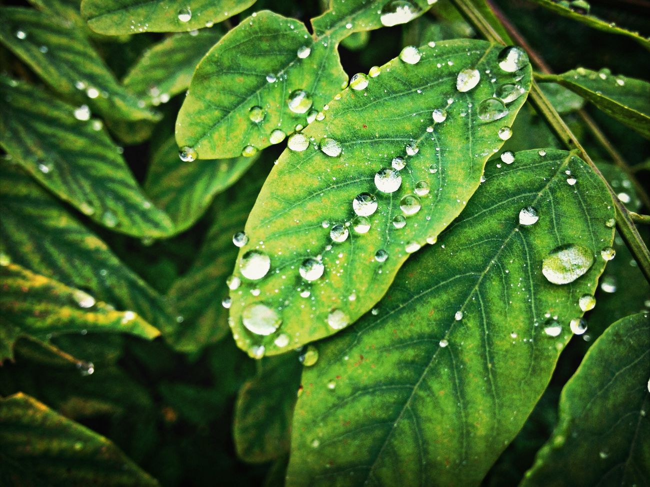 Macro_collection IPhoneography Water Drops Colors Of Autumn