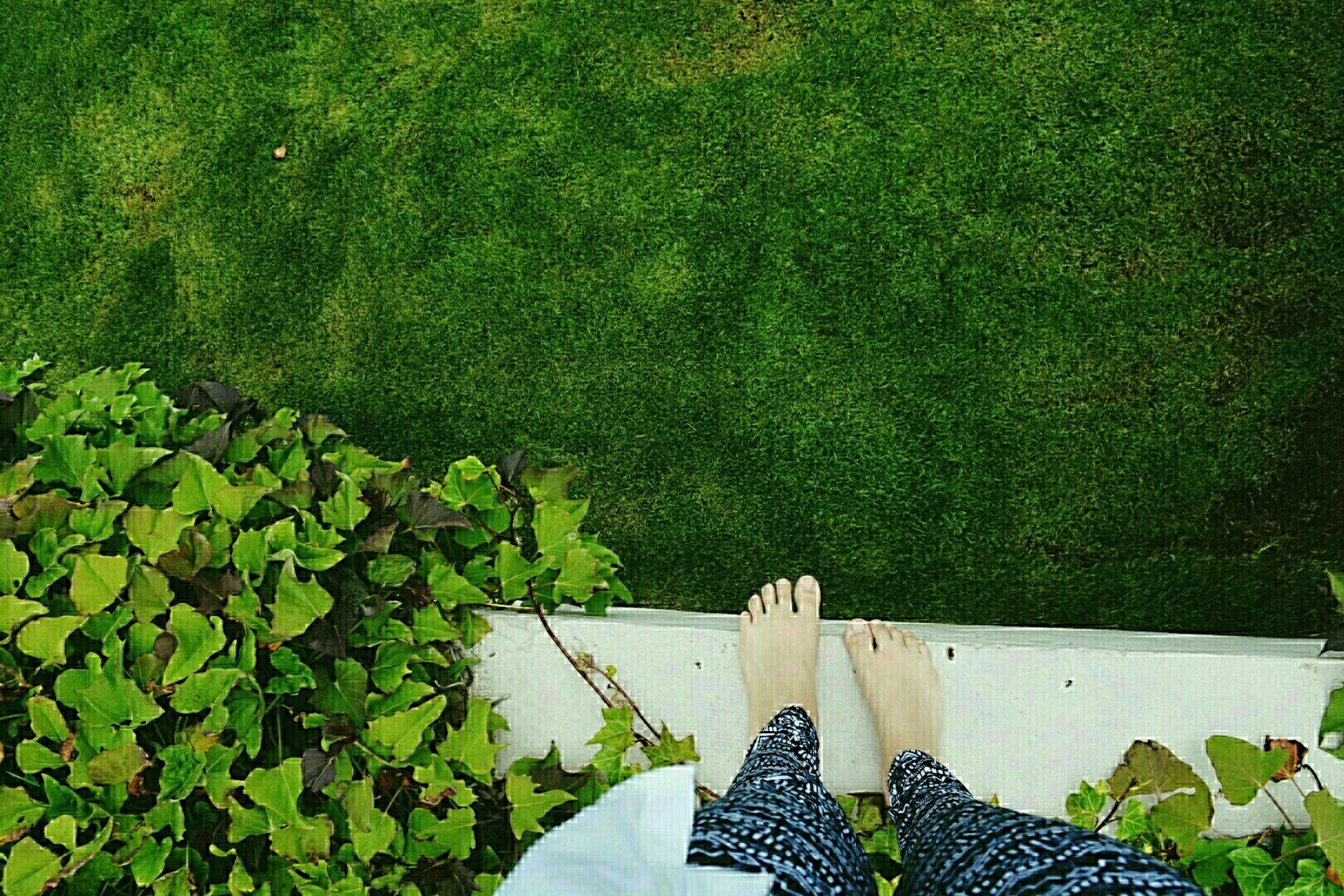 low section, person, personal perspective, high angle view, shoe, green color, lifestyles, leisure activity, relaxation, bench, grass, men, plant, footwear, leaf, chair