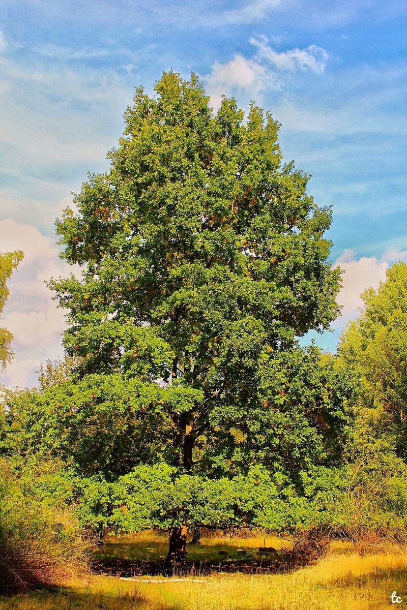Tree Nature Cloud - Sky Field Landscape Scenics Outdoors Naturalreserve Berlin Park Canon Photography
