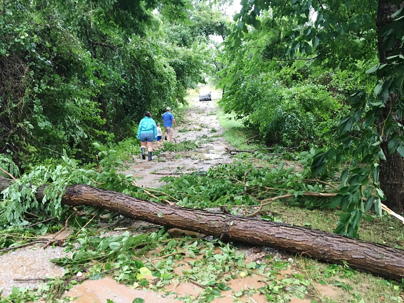 More damage done by our house Coweta Tornado Storm Thunderstorm Tree Trees Branch Branches Nature Outside Outside Photography Oklahoma Home Crazy Moments Landscape