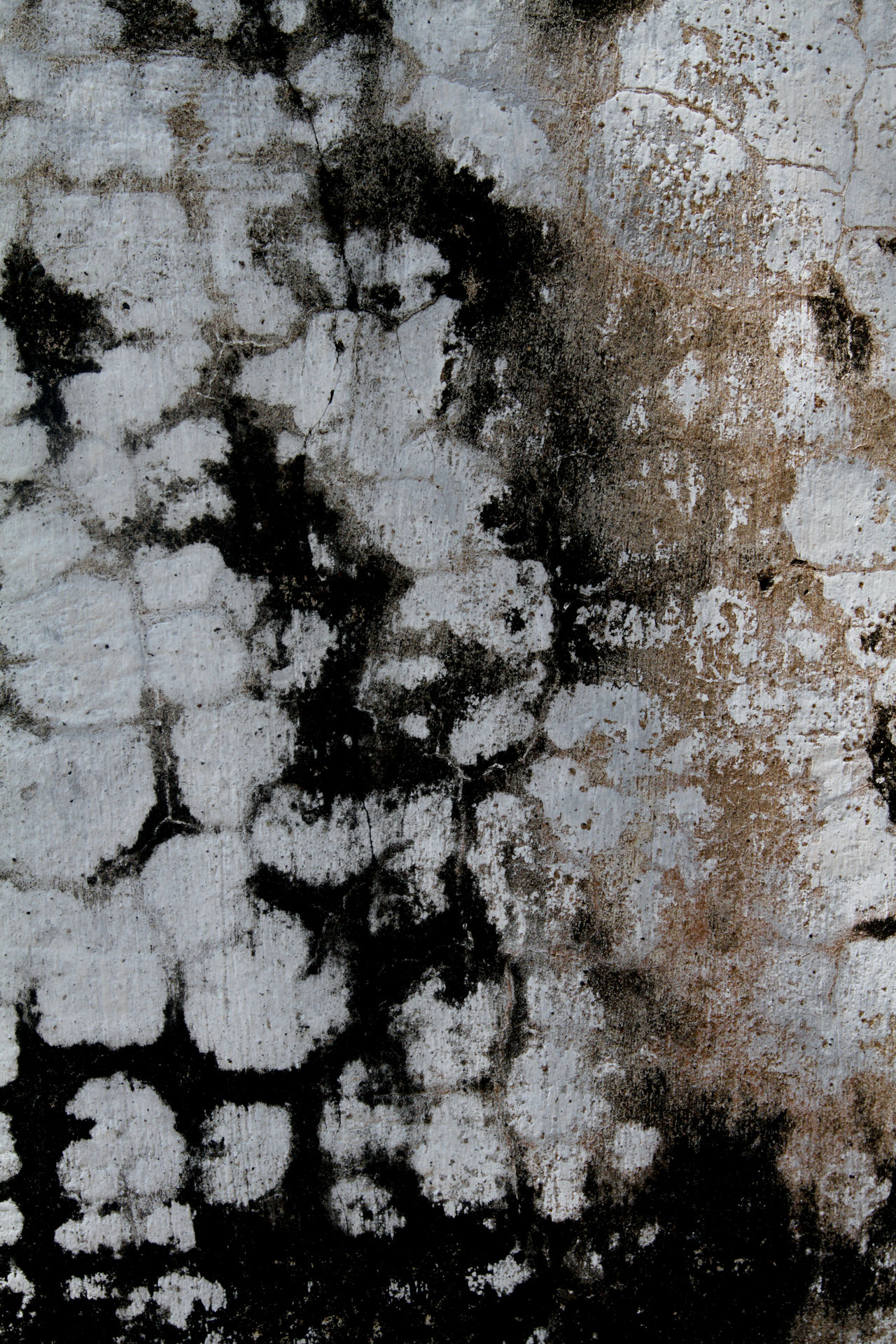 Backgrounds Close-up Creative Day Full Frame Ilustration No People Outdoors Print Printemps Textured  Wall Art
