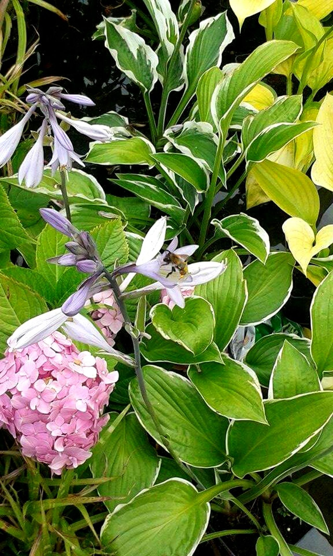 Pszczołą Flower Kwiaty Flowers Kwiat Plant Plants Garden Bee Bee 🐝 Plants 🌱