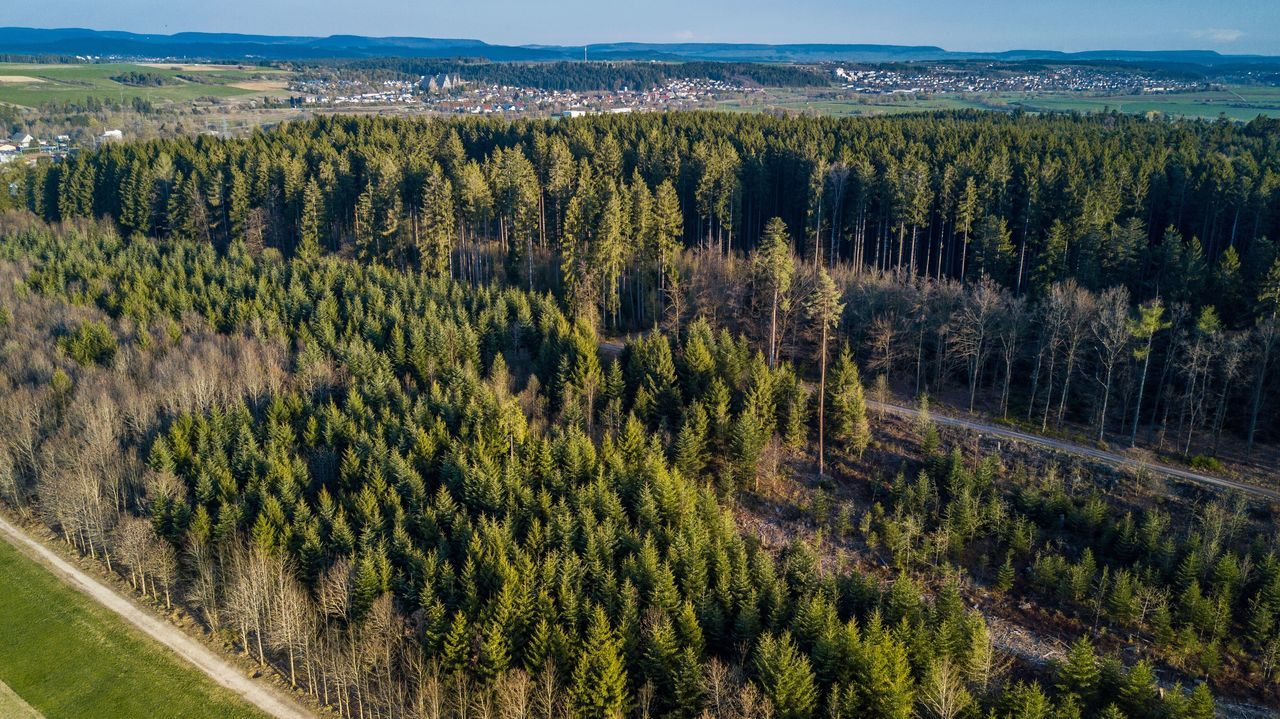 Pine Tree Pinaceae Tree Landscape Forest Nature Green Color Scenics No People Outdoors Mountain Beauty In Nature Day Sky Dji Drone  Dronephotography FreeTime EyeEm Best Shots Blackforest Villingen
