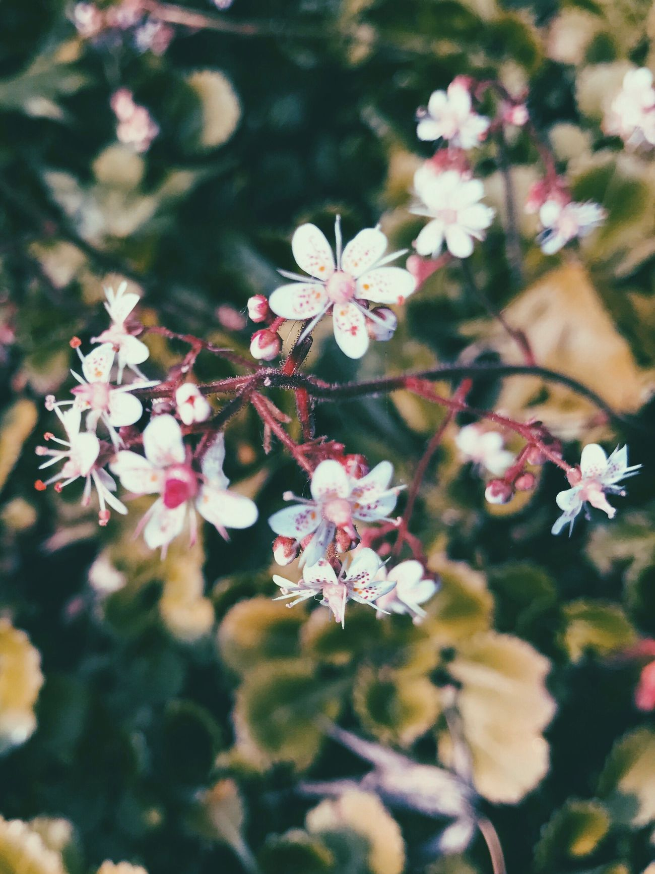 Flowers Flora Nature Spring Beauty In Nature Pretty EyeEm Nature Lover
